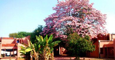 Plantões do Serviço Social do SAE na Moradia